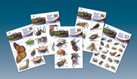 Insects and Spiders - Boxed Set. 25 Sheets Total